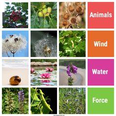 Seed dispersal mix and match activity for children Seeds Preschool, Outdoor Activities, Activities For Kids, Seed Dispersal, Outdoor Classroom, The Fresh, Flowers, Plants, Science Worksheets