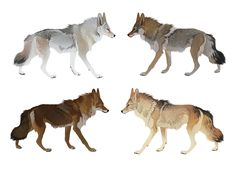 Coyote Colors by CoyoteMange.deviantart.com on @deviantART--Ahh, this is fantastic! So many options!