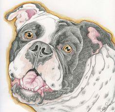 old english bulldog pet dog art original pencil drawing carla smale bobbysbears