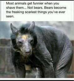 Kinda like shaved koala bears. There's something about bears...