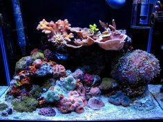 His 20 gallon nano reef is diverse with life, featuring a wide array of boldly colored coral. Description from nano-reef.com. I searched for this on bing.com/images