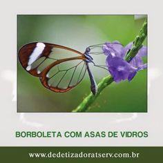 DEDETIZADORA TSERV FRANQUIA: CONHEÇA A BORBOLETA COM ASAS DE VIDROS!! www.dedetizadoratserv.com.br