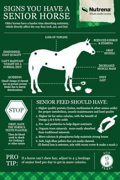A high-fat, controlled starch, complete feed to meet the unique needs of feeding senior horses Horse Tricks, Best Friends Pets, Horse Age, Horse Information, Horse Exercises, Horse Care Tips, Horse Anatomy, Horse Facts, Horse Grooming