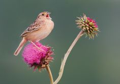Grasshopper Sparrow and Bee