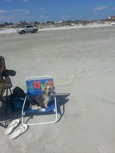 Beach Dog days