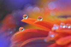 Colorful Explosion... by Juliana Nan on 500px
