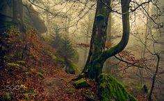 Fog in the woods... by SLautner