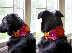 cute ideas for dog collars