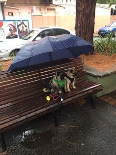 Dog couple patiently waiting beneath umbrella in the rain. | 35 Dogs That Will Make Your Day Instantly Better
