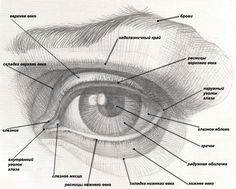 58 Ideas For Eye Anatomy Drawing Illustrations Eye Anatomy, Anatomy Drawing, Anatomy Art, Drawing Lessons, Drawing Techniques, Drawing Tips, Drawing Tutorials, Drawing Heads, Eye Sketch