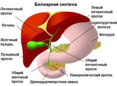 Целебные растения для очищения поджелудочной железы - Шаг к Здоровью