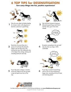 6 Top Tips to Give Your Pets Confidence