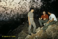 Merlin Tuttle observing emergence of Asian wrinkle-lipped bats with game warden and interpreter at Khao Chang Pran Cave in Thailand during his return visit 10 years after gaining the site's protection. Conservation,Merlin Tuttle's Bat Conservation, Merlin Tuttle, bat conservation