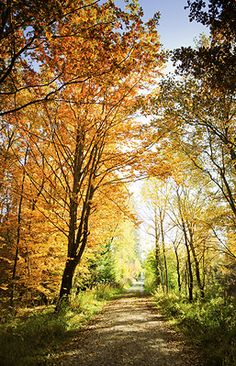 Delaware Water Gap National Recreation Area (recreation area is what replaced the town that the government destroyed for a project that didn't go through - Bushkill, PA where I grew up) http://032ecd8.netsolhost.com/WordPress/wp-content/uploads/2011/03/blog_pic.png