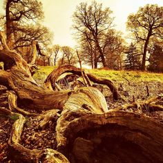 http://electroosmosisltd.co.uk  #landscape #athmosphere #dramaticphotography…