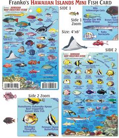1000 images about snorkeling in hawaii on pinterest for Hawaiian fish identification