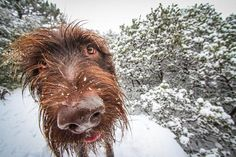 Snow is the best  Photo by JILL Hayes — National Geographic Your Shot