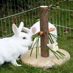 Mangeoire en bois naturel pour rongeur