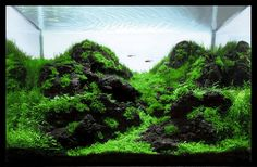 Inspiration - This tank uses only black hardscape and moss to create a natural environment for your fish.