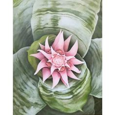 f00a88254 37 Best Laurie Flaherty images | Plant art, Box frames, Contemporary Art