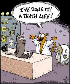 Off The Mark  Cat memes - kitty cat humor funny joke gato chat captions feline laugh photo