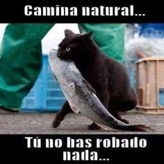 Imagenes Bonitas Gato Roba Pescado
