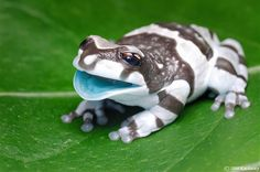 Eventhough I am scared to death with frogs, this one is colorfully cute