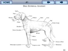dogs muscular system Dog Chart, Muscular System, Design Reference, Argos, Animals, Animales, Animaux, Muscle Tissue, Animal
