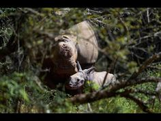 Three Years After Surviving the Worst, This Rhino Gave Birth to a Healthy Baby | The Rainforest Site Blog