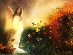 Google Image Result for http://www.scenicreflections.com/files/angel_angels_74540402_1024_768_jpg_Wallpaper_aezxb.jpg