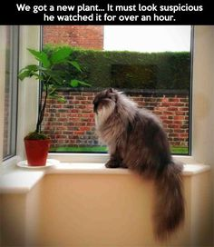 We got a new plant….it must look suspicious. He watched it for over an hour.