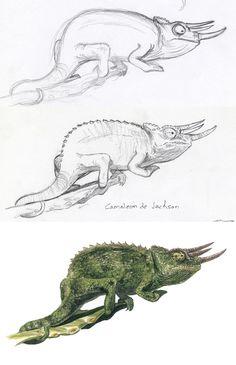Camaleón de Jackson