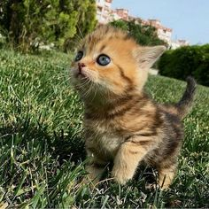 Cute Animals Together Gif long Cutest Kittens In The World Pictures once Cute Kittens And Puppies To Draw her Cute Animals Gif Cute Cats And Kittens, I Love Cats, Kittens Cutest, Funny Kittens, Newborn Kittens, Baby Cats, Cute Baby Animals, Funny Animals, Animals Images