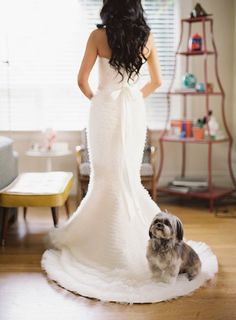 Shihtzu Time - The World of the loveable Shih Tzu Perro Shih Tzu, Shih Tzu Dog, Shih Tzus, Wedding Dress Train, Wedding Dresses, Bride Dresses, Wedding Pics, Dream Wedding, Wedding Ideas
