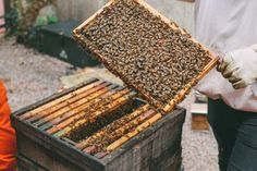 Places In England, Bee Farm, Beekeeping, Travel Planner, Homesteading, Farmer, Travel Inspiration, Oc, Paradise