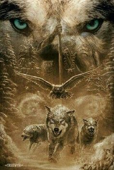 D(31/3/2017 ) lobos