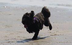 Jojo on the beach - July 2014