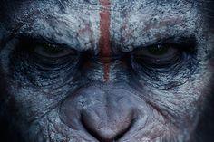 Il Pianeta delle Scimmie: in arrivo il supercofanetto Caesar Warrior'S Collection