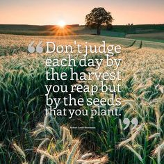 Don't judge each day by the harvest you reap but by the seeds that you plant. Robert Louis Ste...