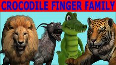 Crocodile Finger family 3d rhyme | Lion Vs Crocodile | Elephant Vs Croco... Finger Family, Crocodile, Lion Sculpture, Elephant, Statue, 3d, Funny, Crocodiles, Elephants