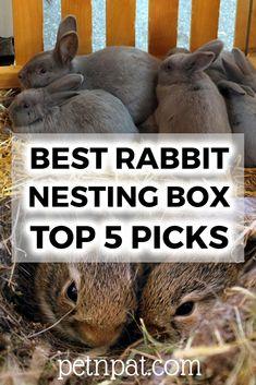 Best Rabbit Nesting Box Guide | Top 5 Picks #pets #animals #rabbits #bunny