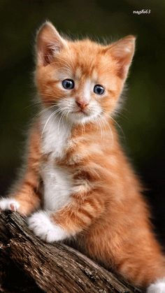 ANIMALS-NATURE PHOTOS 3. - Community - Google+