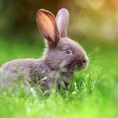 A beautiful bunny for you this Wednesday! #sweet #animal #pet #cute #adorable #animals #happy #petstagram #supercute #cutepets #animallover #baby #bunny #rabbit #tagforlikes #cat #animal #photooftheday