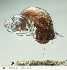 9GAG - Just for Fun! (hermit crab,glass shell)