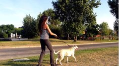 The American Heart Association released a study that said pet ownership, especially dog ownership, is associated with a decreased risk of heart disease and increased survival among patients. Dog owners, they said, engage in more walking and physical activity than other people, and are 54 percent more likely to get the recommended amount of physical activity than their non-dog-owning counterparts.
