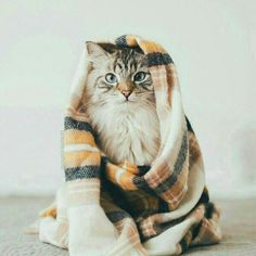 These pretty cats will bring you joy. Cats are fascinating creatures. Crazy Cat Lady, Crazy Cats, I Love Cats, Cute Cats, Baby Animals, Cute Animals, Animal Gato, Cat Aesthetic, Gatos Cats