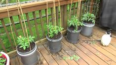 Staking, Caging and Mulching Large Container Tomatoes - The Rusted Garde...