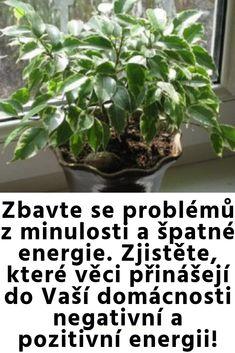 Zbavte se problémů z minulosti a špatné energie. Zjistěte, které věci přinášejí do Vaší domácnosti negativní a pozitivní energii! Feng Shui, Plants, Ideas, Medicine, Psychology, Flora, Plant