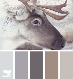 rustieke stoere en warme kleuren , color inspiration, calm winter color palette, love these neutral winter colors.remind me of looking out the window while sitting by the fire place. view of a winter wonderland Color Palate, Color Tones, Design Seeds, Paint Schemes, Color Swatches, Paint Swatches, House Painting, Painting Walls, House Colors