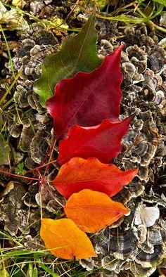 Все цвета опавшего листа #autumn #color #leaves